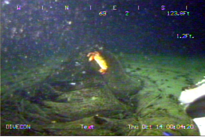 Remotely Operated Vehicle video still showsing a crab near the top of extruding tar on a tar mound in the Santa Barbara Channel. Lack of colonizing sessile organisms suggests that this mound is quite young.  Image source: Lorenson, et al. 2009.