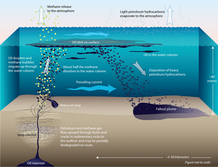 The fate of oil from a natural seep in the Santa Barbara Channel.  Image source: Woods Hole Oceanographic Institution (2009).