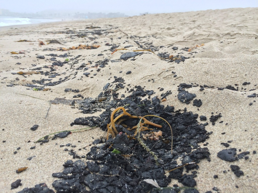Tar ball strand line at the wrack line at Ventura State Beach on May 30, 2015.