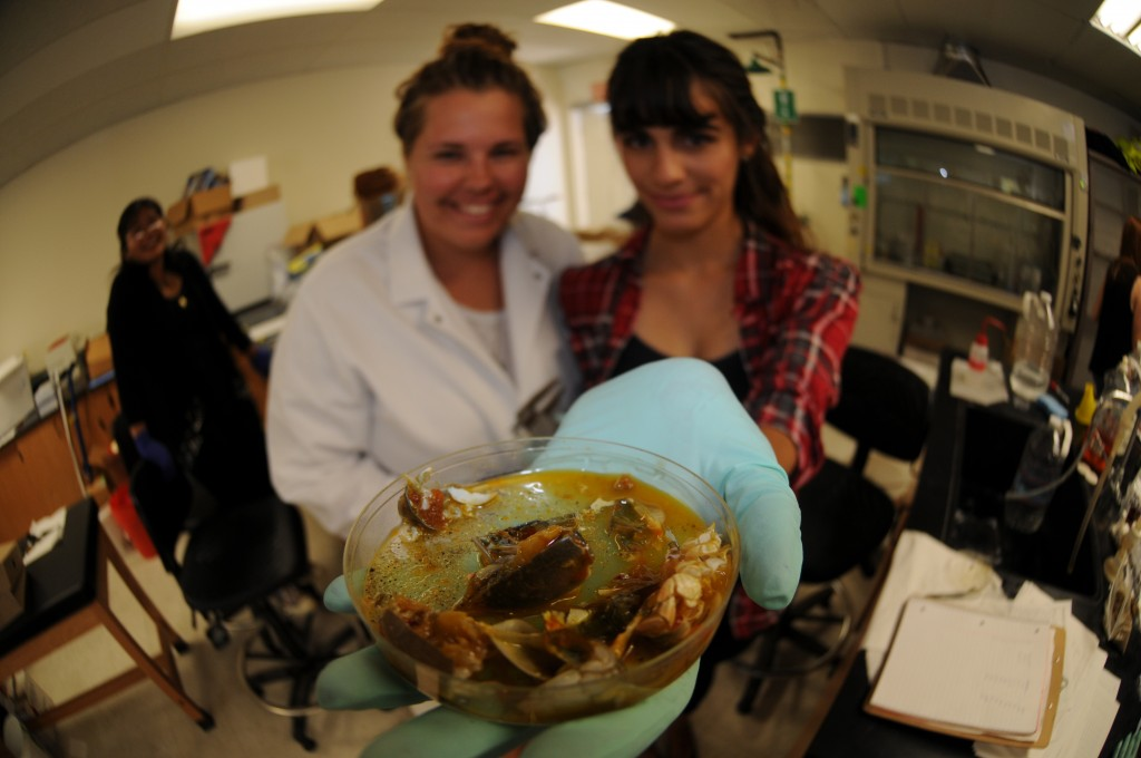 Dissected sand crabs in the PIRatE Lab